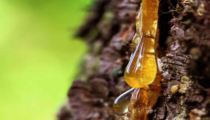 PREXELENT Pine tree resin active agent Prexelent technology Premix